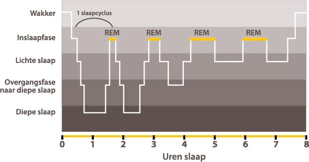 Dorsoo blog fasen van de slaapcyclus