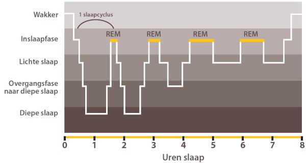 Illustratie Dorsoo slaapcyclus rem-slaap