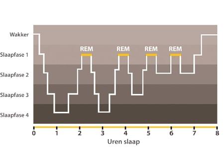 Dorsoo blog fasen slaapcyclus